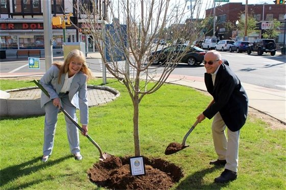 Tree planting at City Hall dedicated in memory of Ed Silver