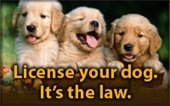 Residents reminded to renew dog licenses by June 30